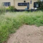 借地の草刈り「畑の手入れ」