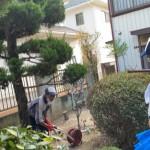 庭木の剪定作業「一軒家の片付け売却予定」